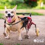 Special Needs Pets   Taste of the Wild