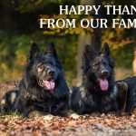 Happy Thanksgiving From Our Family to Yours | Taste of the Wild Pet Food
