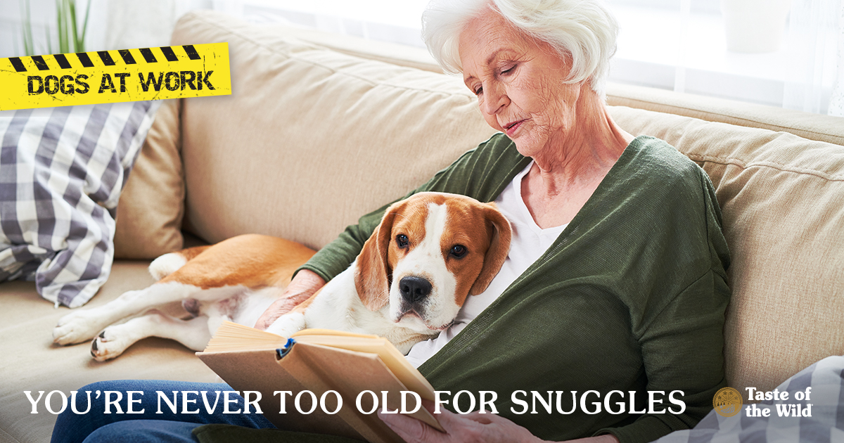 Dog at Work: You Are Never Too Old for Snuggles | Taste of the Wild