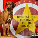Dogs at Work | Bringing the Fun Back to the Big Top