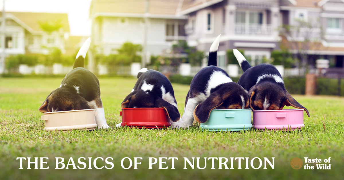 Beagle Puppies Eating Out of Dog Bowls in a Backyard | Taste of the Wild Pet Food