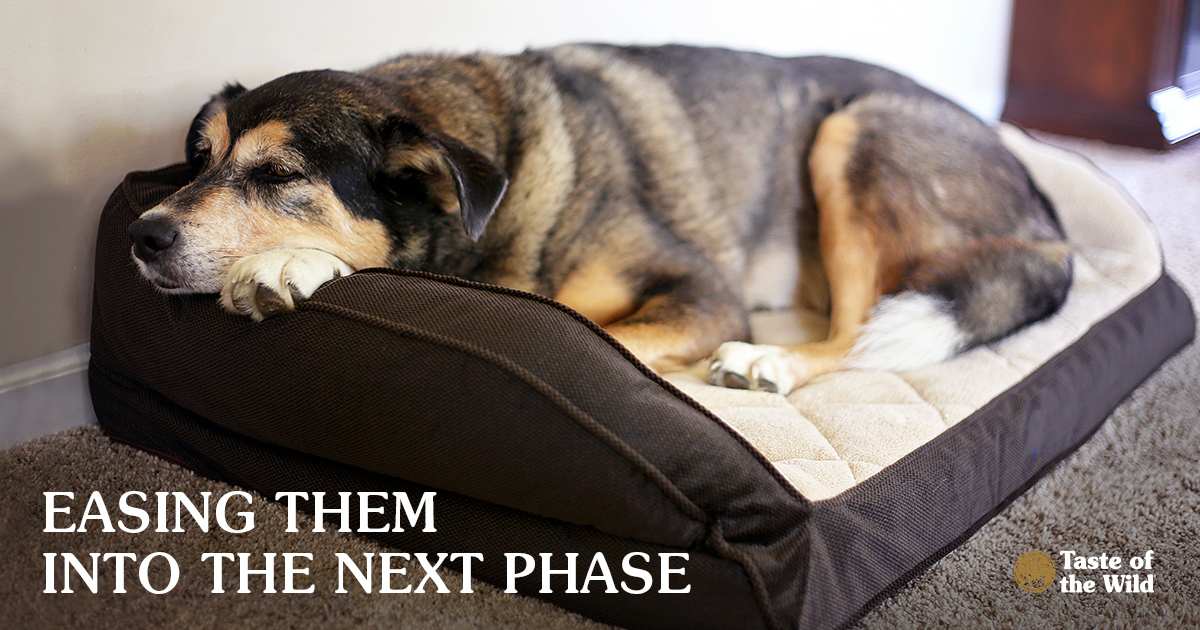 Senior Mix Breed Dog Resting in a Dog Bed | Taste of the Wild Pet Food