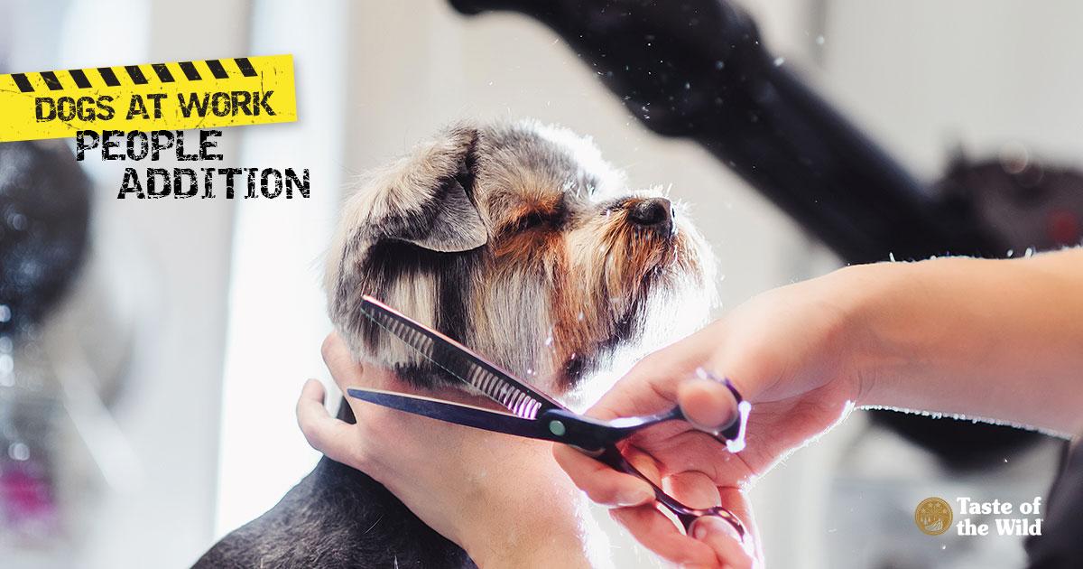 Careers for Pet Lovers: Dog Grooming | Taste of the Wild