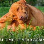 Brown Labrador Mixed Dog Scratching His Ear while Laying on the Grass   Taste of the Wild Pet Food