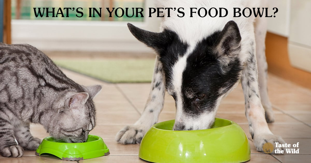 Cat and Dog Eating Out of Food Bowls in the Kitchen | Taste of the Wild Pet Food