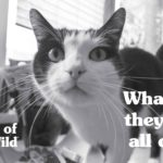 Black and White Photo of Funny Tabby Cat Looking into Home Surveillance Camera | Taste of the Wild Pet Food