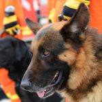 Group of Rescue Dogs and Their Handlers | Taste of the Wild Pet Food