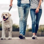 Couple Walking with a Labrador Retriever Dog at the Park | Taste of the Wild Pet Food