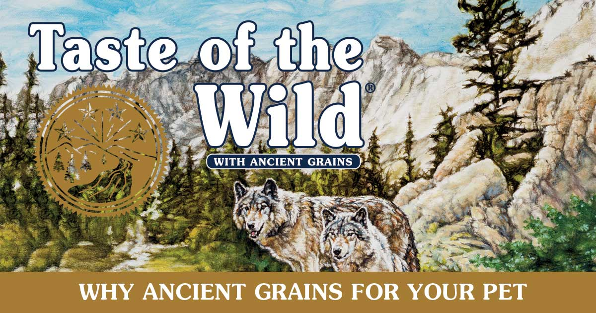 Why Ancient Grains for Your Pet? Infographic | Taste of the Wild Pet Food