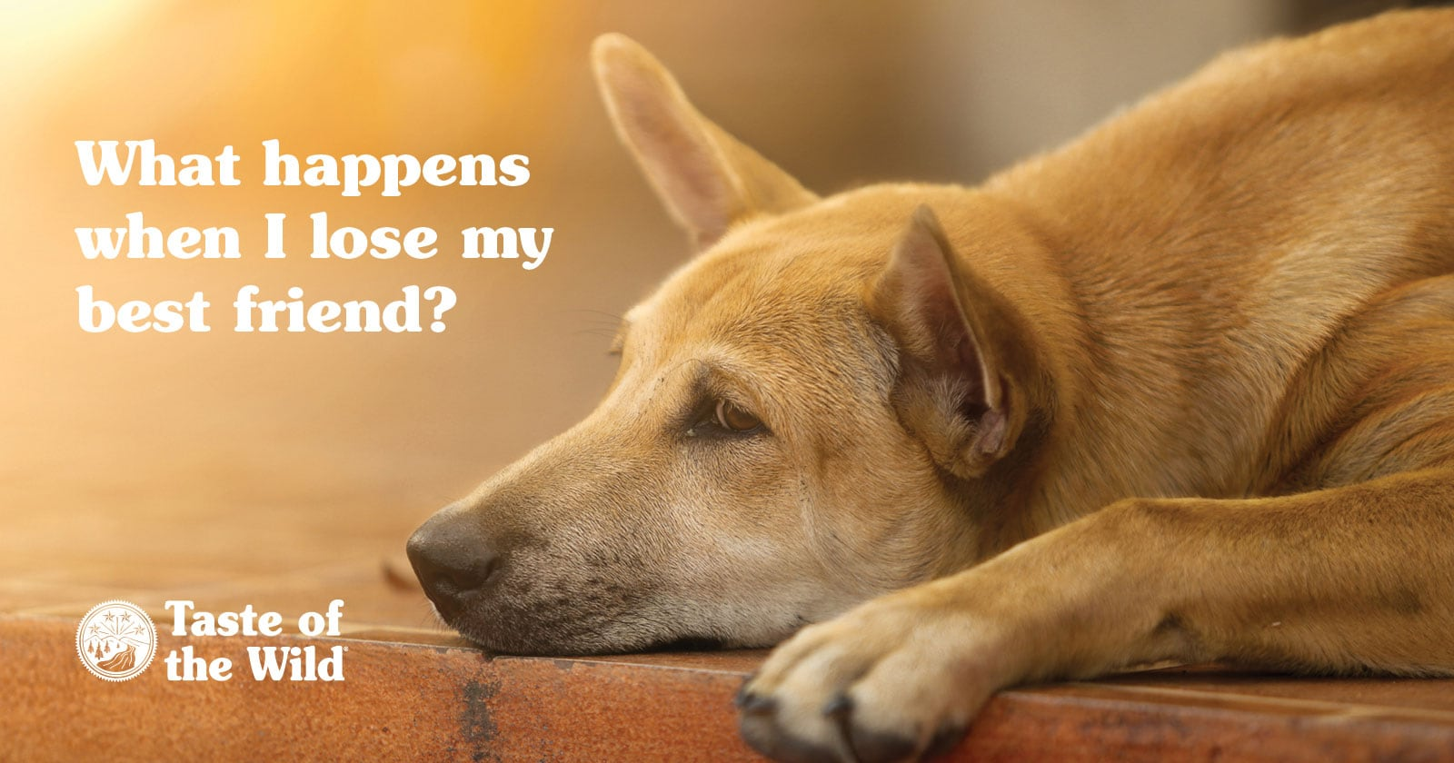 Sad and Lonely Dog on a Curb After Losing His Owner | Taste of the Wild Pet Food