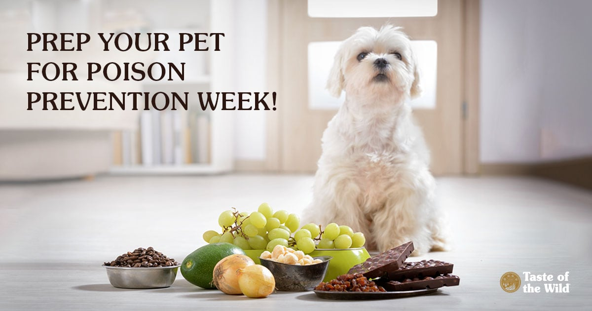 Prep Your Pet for Poison Prevention Week | Taste of the Wild