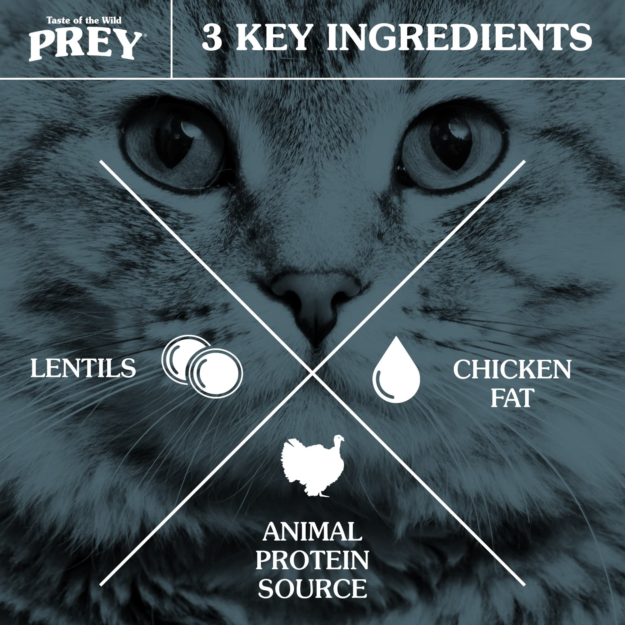 3 Key Ingredients for Cats: Animal Protein Source, Sunflower Oil and Lentils
