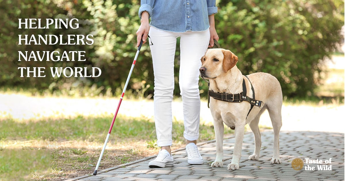Guide Dog Walking With Blind Owner | Taste of the Wild
