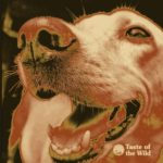 Thermal Image of a Dog's Nose | Taste of the Wild