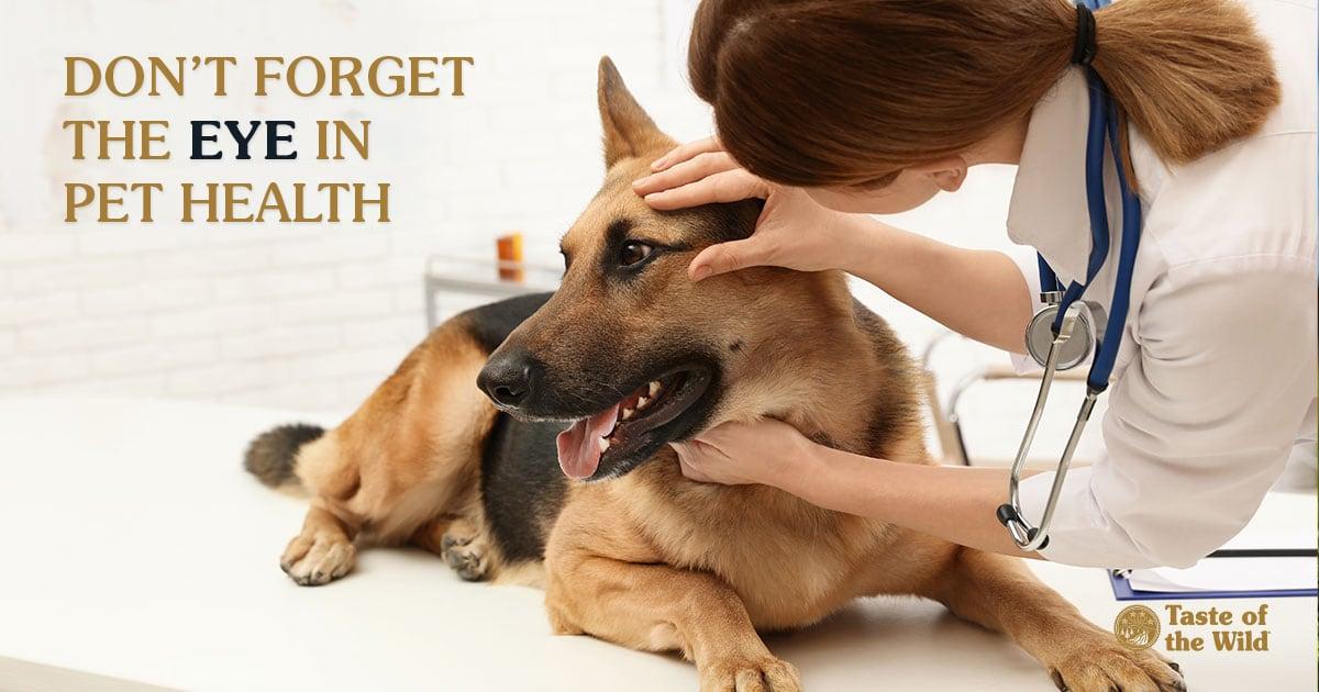 Dog Getting an Eye Exam | Taste of the Wild