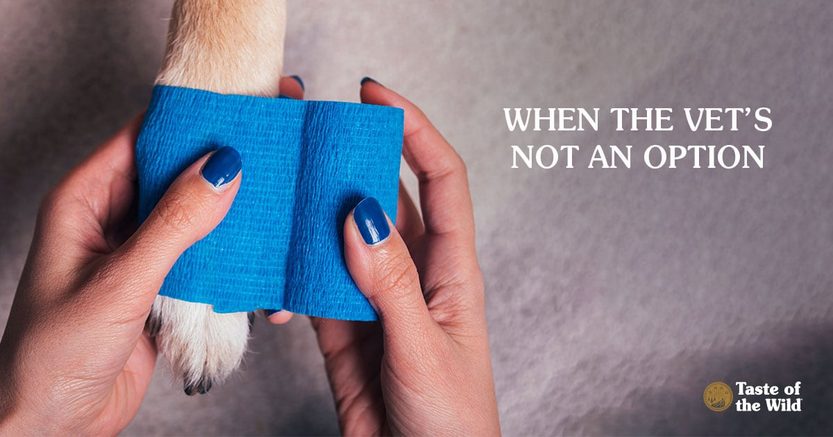Woman Bandaging Dog's Paw | Taste of the Wild
