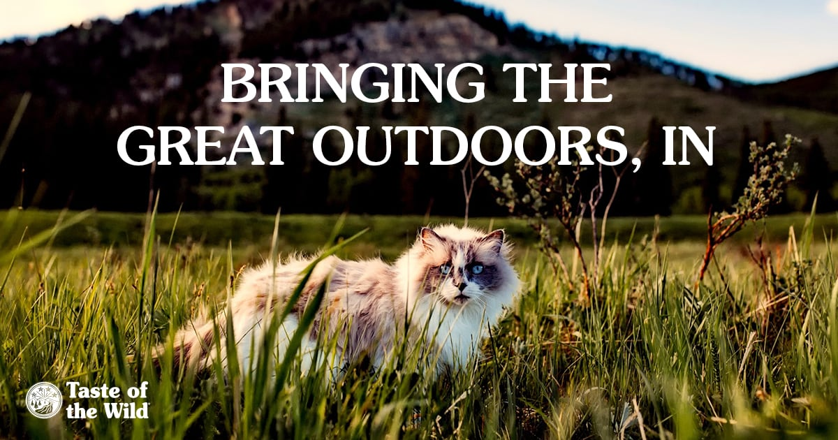 Cat Sitting on a Grassy Field | Taste of the Wild
