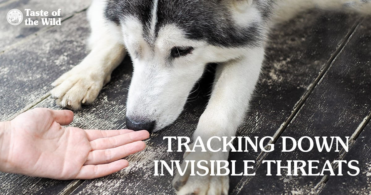 Dog Sniffing a Person's Hand | Taste of the Wild