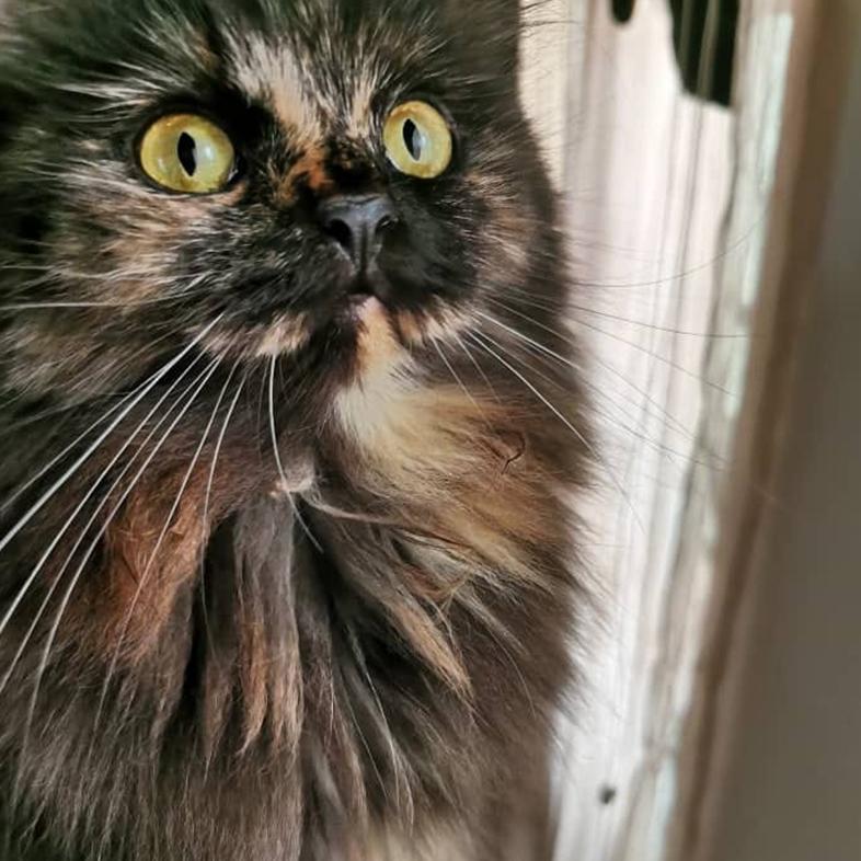 Black Cat | Taste of the Wild