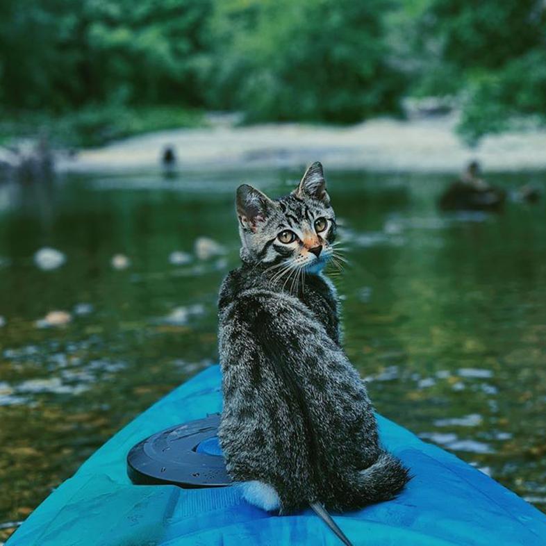 Cat on a Kayak | Taste of the Wild