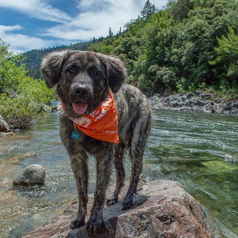 Dog at the River | Taste of the Wild