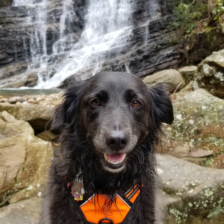 Dog in Front of a Waterfall | Taste of the Wild