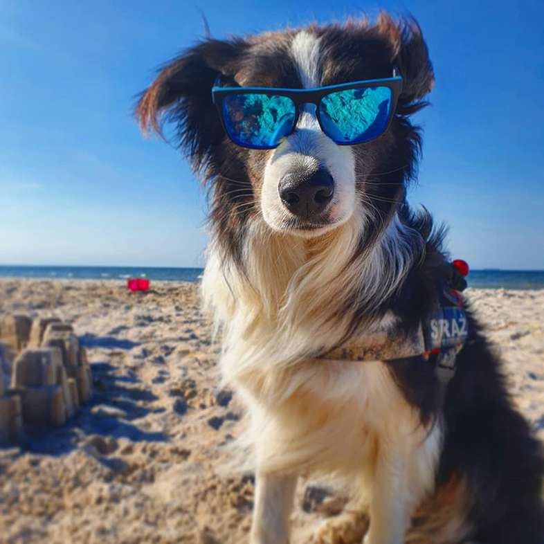 Dog on the Beach Wearing Sunglasses | Taste of the Wild