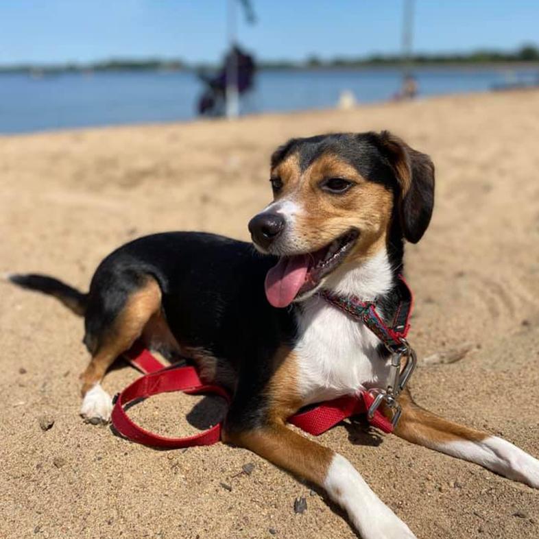 Dog on the Beach | Taste of the Wild