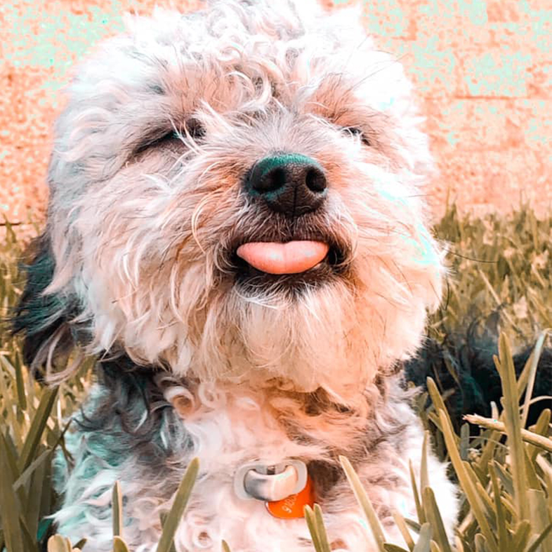 Dog with Eyes Closed and Tongue Out | Taste of the Wild