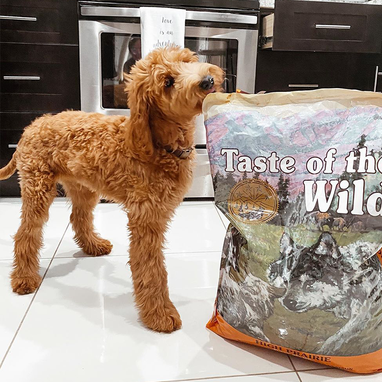 Goldendoodle with Bag of Dog Food | Taste of the Wild