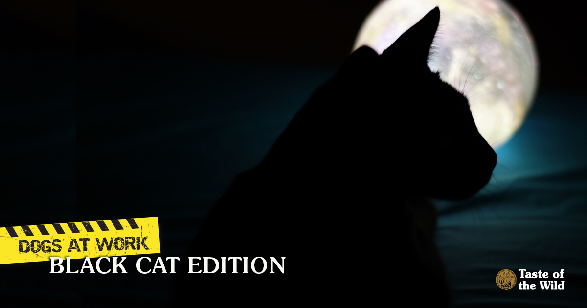 Black Cat with Moon in Background | Taste of the Wild