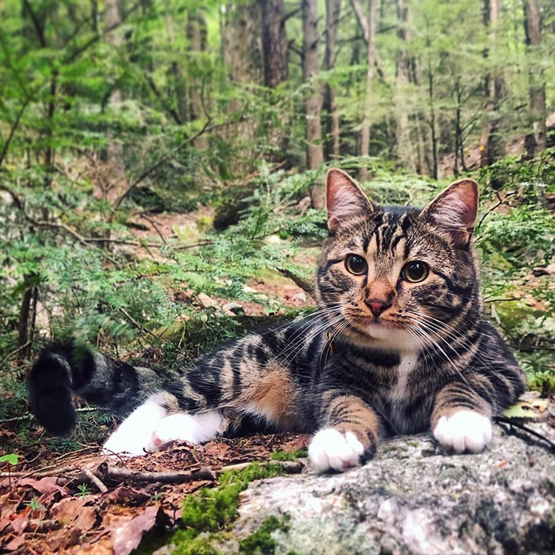 Cat Lying on Ground in the Woods | Taste of the Wild