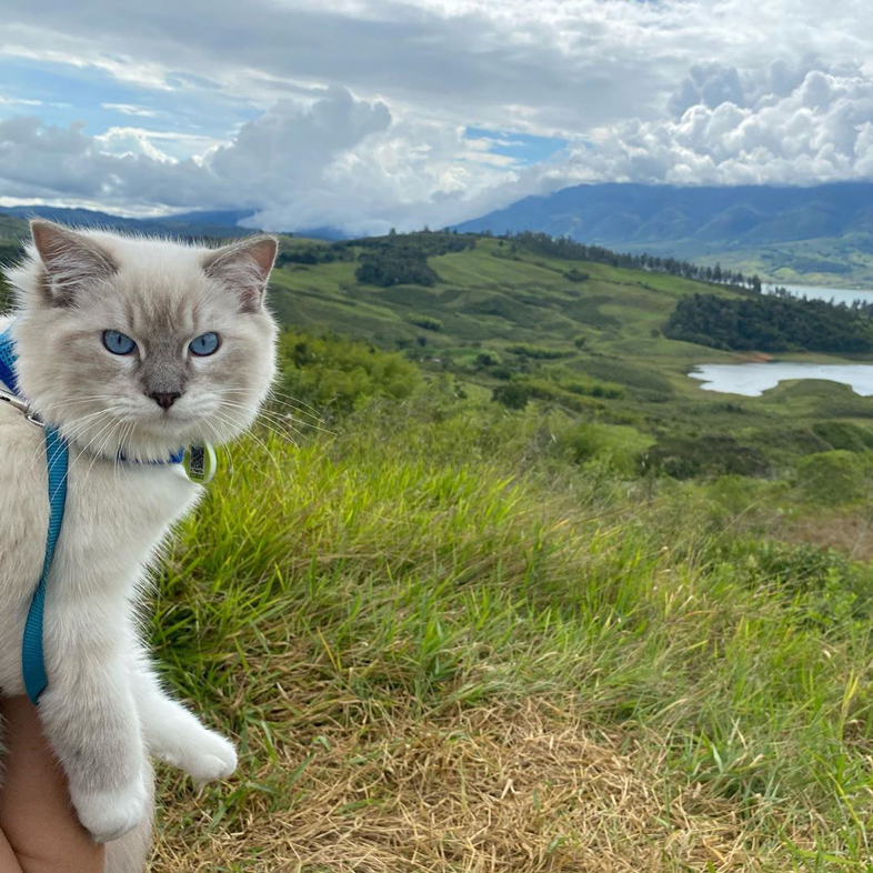 Cat With A Leash Outdoors | Taste of the Wild