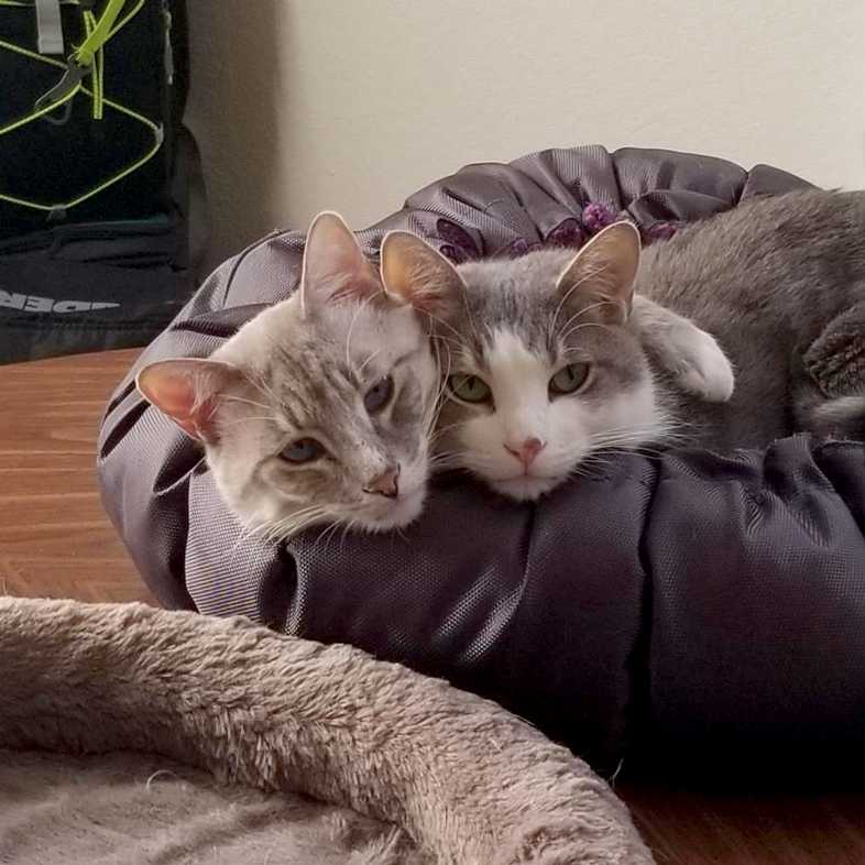 Cats Cuddling On Table | Taste of the Wild