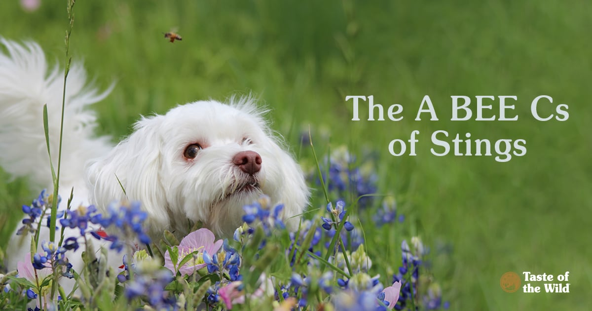 Dog Near Flowers and Bees   Taste of the Wild