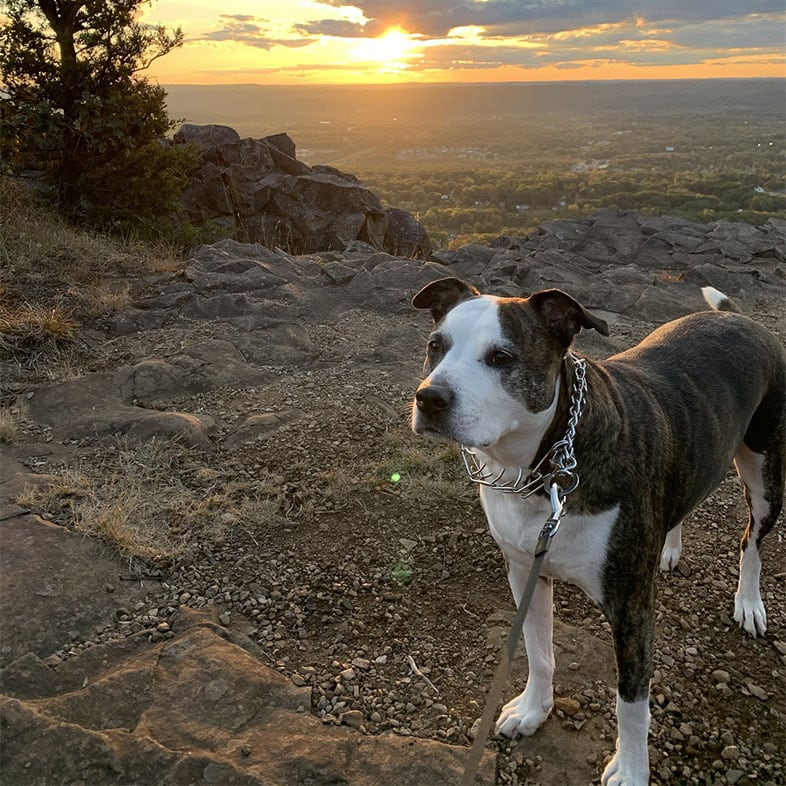 Dog in Front of Sunset | Taste of the Wild