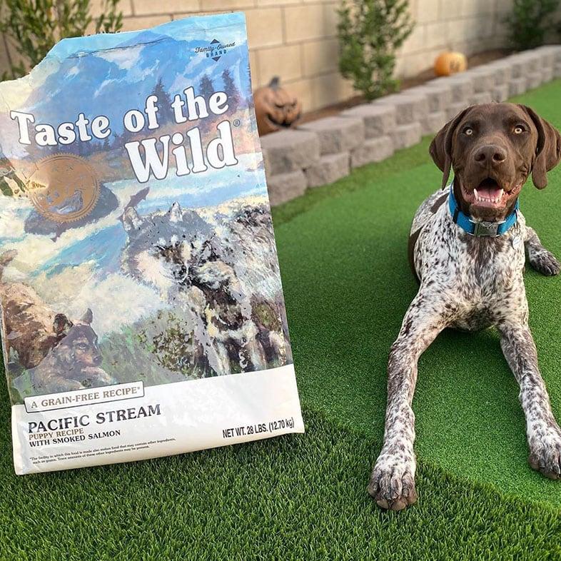 Dog Sitting Next to Taste of the Wild Dog Food Bag | Taste of the Wild