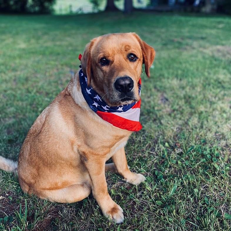 Dog Outside Wearing Bandana | Taste of the Wild