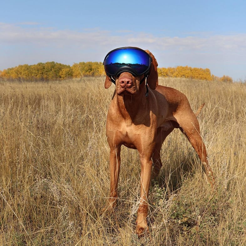 Dog Wearing Ski Goggles | Taste of the Wild