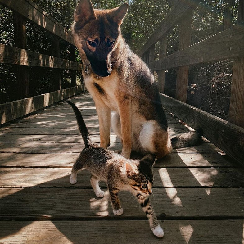 Dog and Cat Hiking | Taste of the Wild