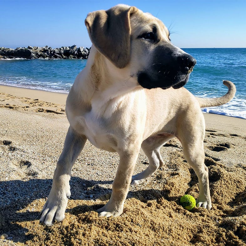 Dog at the Beach in the Sand | Taste of the Wild