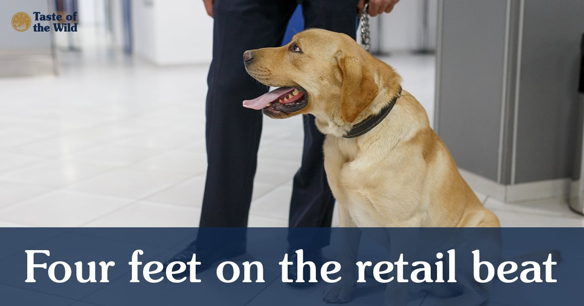 Dog Working as Mall Security | Taste of the Wild