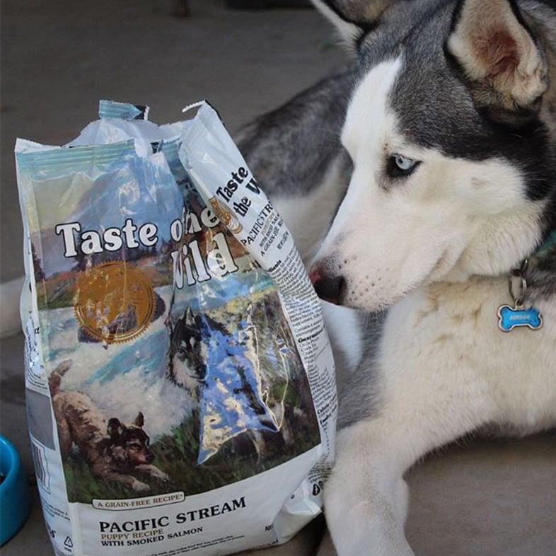 Husky Dog Looking at Taste of the Wild Dog Food Bag | Taste of the Wild