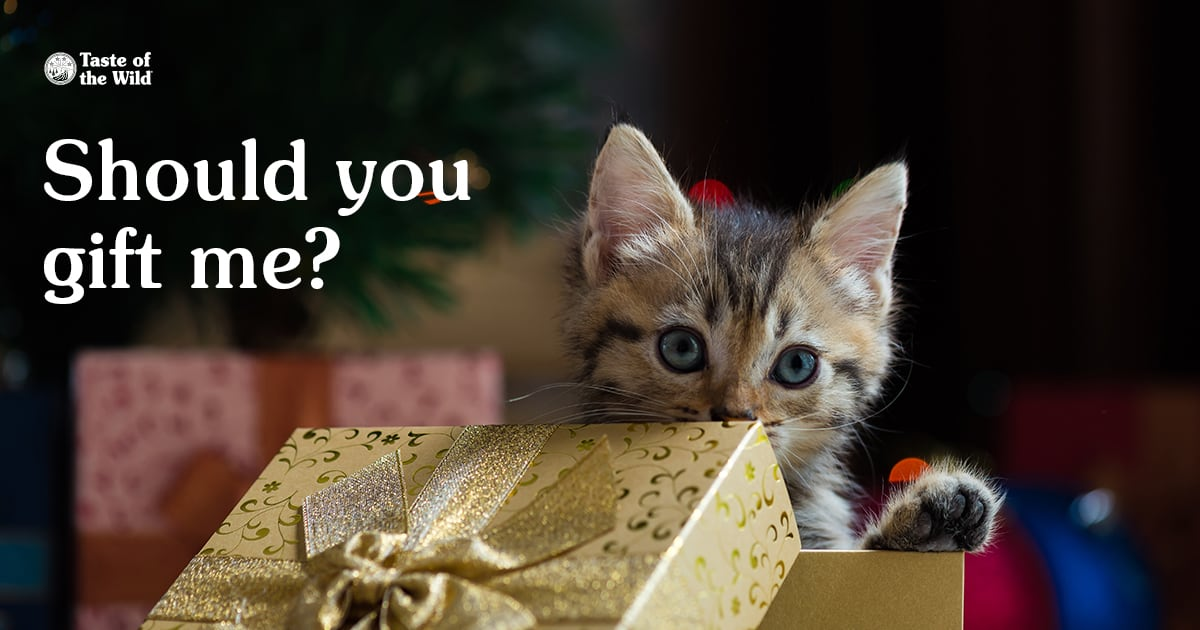 Kitten Coming Out of Gift Box | Taste of the Wild