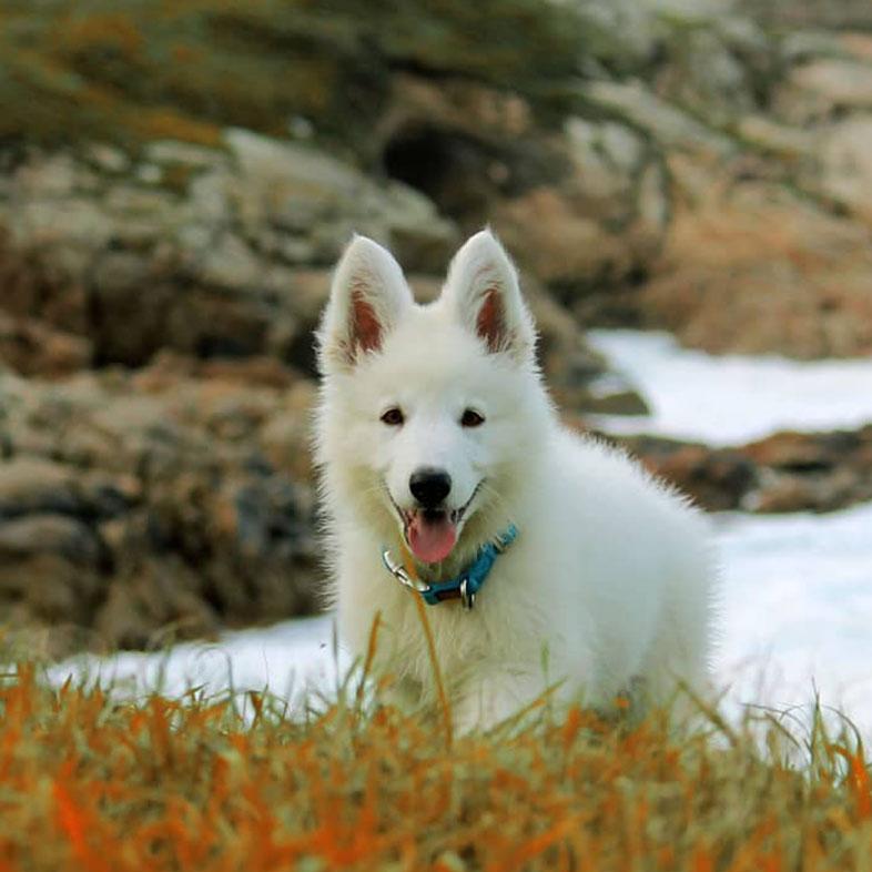 White Dog Running Uphill | Taste of the Wild