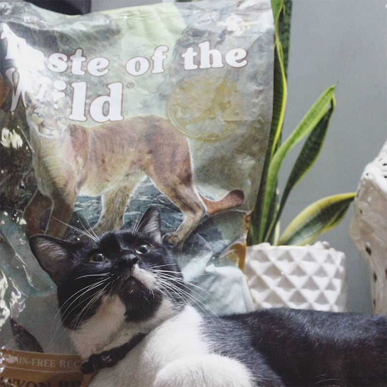 Black and White Cat Looking Surprised Next to Taste of the Wild Cat Food Bag | Taste of the Wild