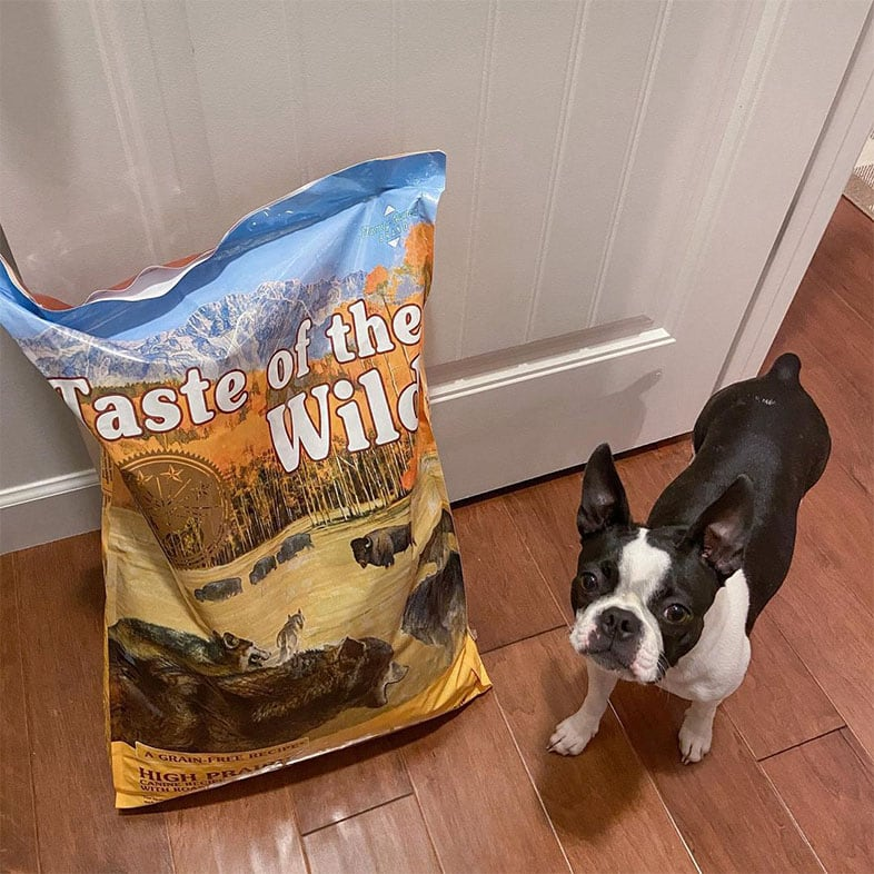 Dog Looking Up Next to Taste of the Wild Dog Food Bag | Taste of the Wild