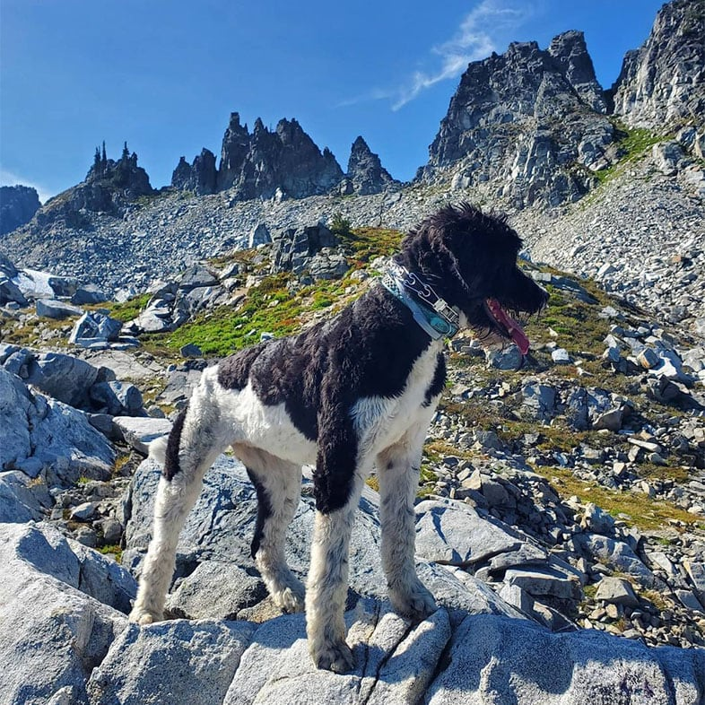 Dog Standing on Rock in the Mountains | Taste of the Wild