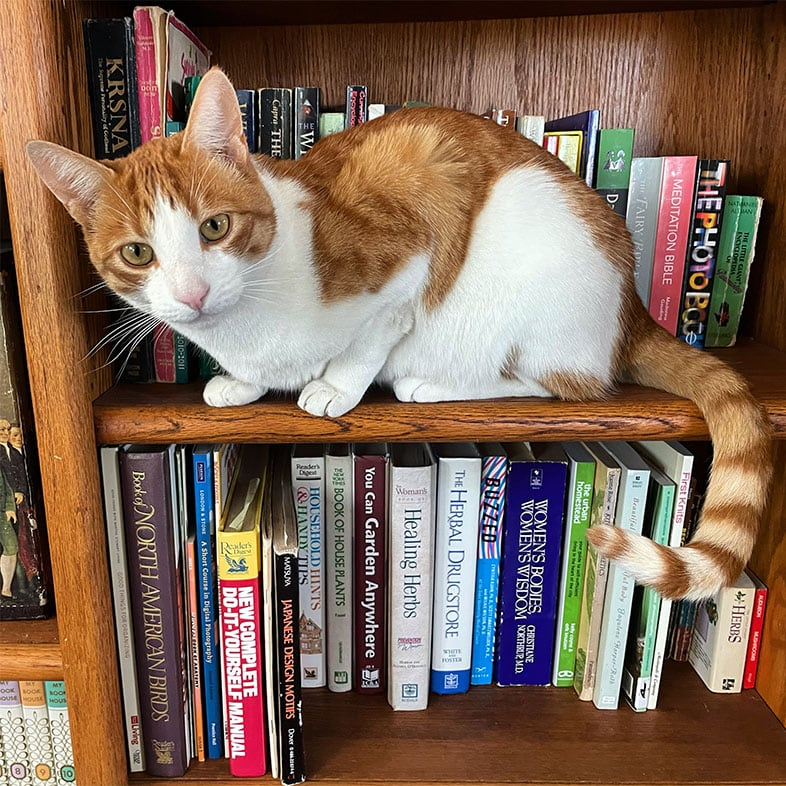 Orange Tabby Cat Sitting on Bookshelf | Taste of the Wild
