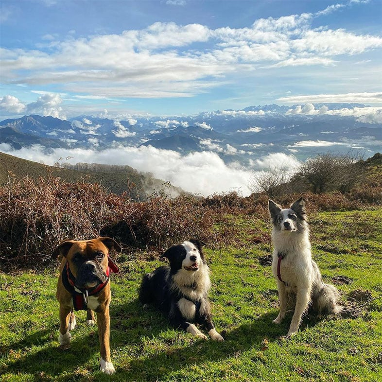 Three Dogs Sitting in Grass on Top of a Mountain | Taste of the Wild